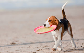 5-safety-tips-for-taking-dog-to-the-beach0